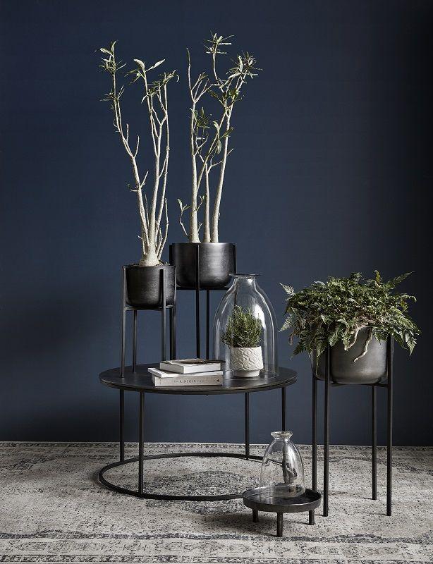 Nordal - Blomsterstand - Medium - Sort blomsterstand